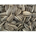 USA Sunflower Seeds (5kg)